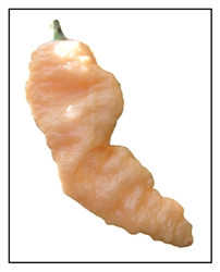 Bhut Jolokia Peach Ghost Pepper