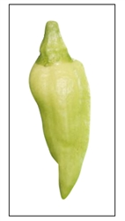 White Bhut Jolokia Pepper