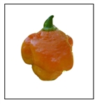 Yellow Moruga Scorpion Pepper