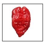 Genghis Khans Brain Pepper
