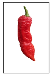Naga Bengal Pepper