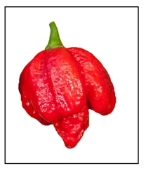 Super Hot Beast Pepper