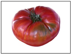 Grandfather Ashlock Tomato