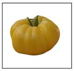 Dixie Golden Giant Tomato