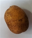 German Butterball Seed Potato