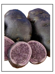All Blue Seed Potatoes