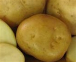 Cobbler Seed Potatoes