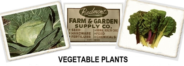 Garden Vegetable Plants For Sale Online: Buy Spring Or Fall Vegetable Plants:  Piedmont Farm U0026 Garden
