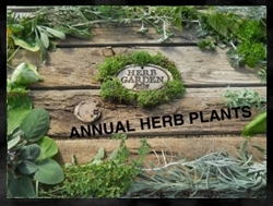 Herb Plants For Sale Online: Buy Annual and Perennial Herb