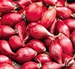 Red Whethersfield Onion Sets 1/4 lb. Bulbs