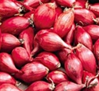 Red Whethersfield Onion Sets 1/2 lb. Bulbs